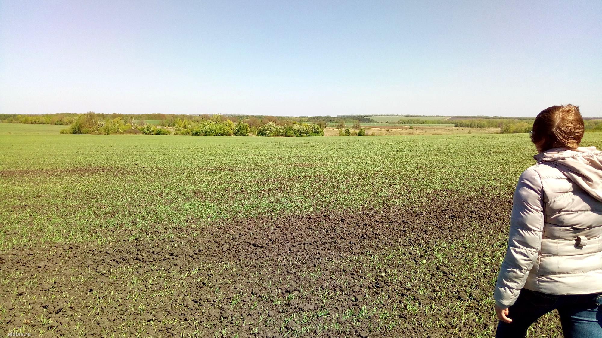 Где находится куликова поле