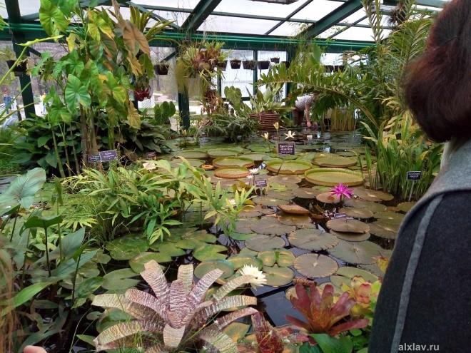 Ботанический сад МГУ (Аптекарский огород)